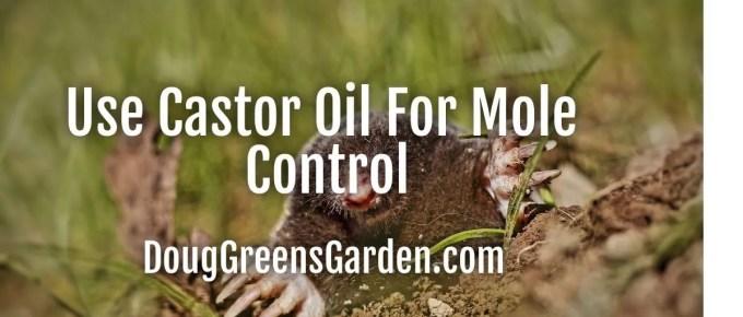 castor oil for moles
