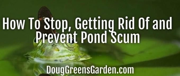 prevent pond scum