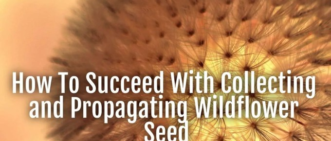 collecting propagating wildflower seed