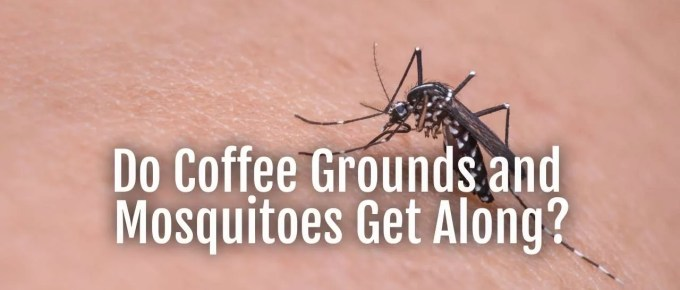 coffee grounds and mosquitoes