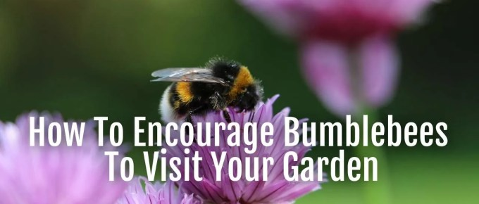 encourage bumblebees