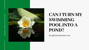 turn pool to pond