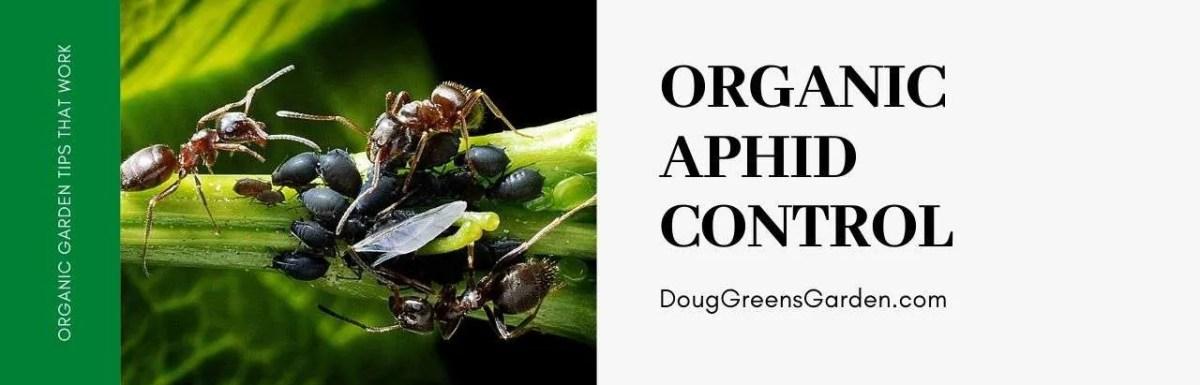 organic aphid control