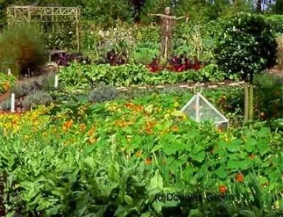Irish vegetable garden
