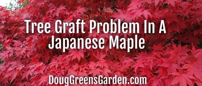 tree graft problem
