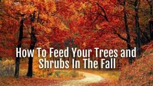 feed trees fall