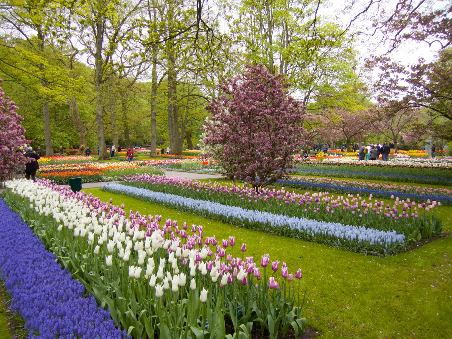 Keukenhof Gardens Netherlands  May 2013  Douglas Stebila