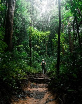 douglas-news network rainforest conservation block
