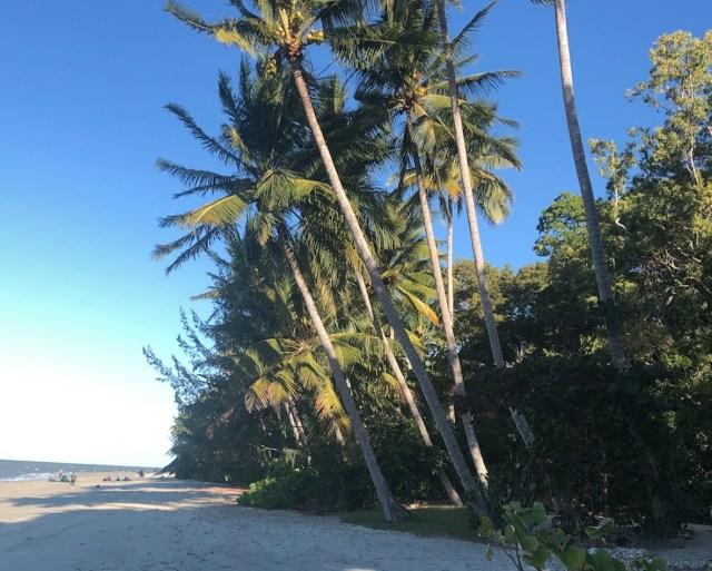 Mature coconut palms on Four Mile Beach