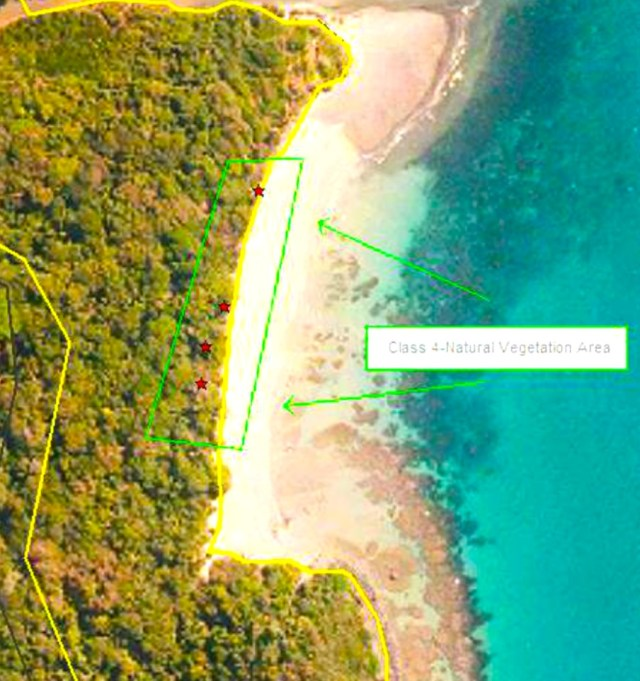 There are very few coconuts on the littoral edge of the forests from Emmagen Beach to just before Cowie Beach as this section is amongst the least disturbed examples of littoral forest in the Wet Tropics.