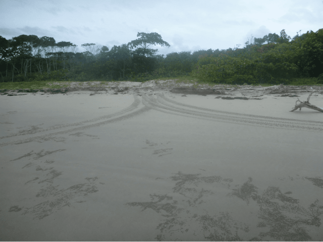 DSSG concerns with wonga beach foreshore management
