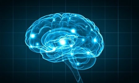 44957814 - concept of human intelligence with human brain on blue background
