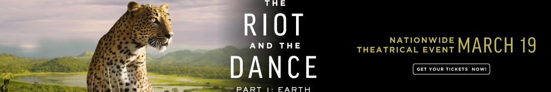 Riot Dance