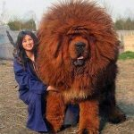 The Mastiff of the Lord