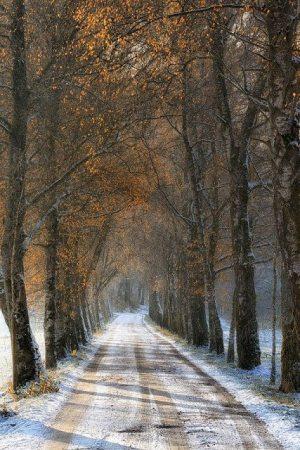 open-road-11