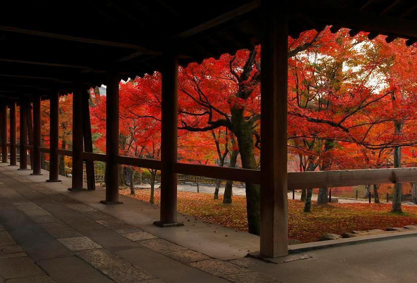 京都紅葉2018おすすめスポットライトアップ・イベント情報
