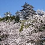 姫路城桜花見