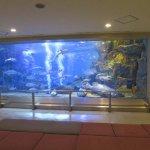 丹後魚っち館