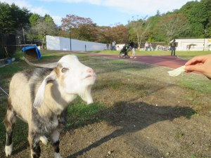 福知山三段池動物園えさやり