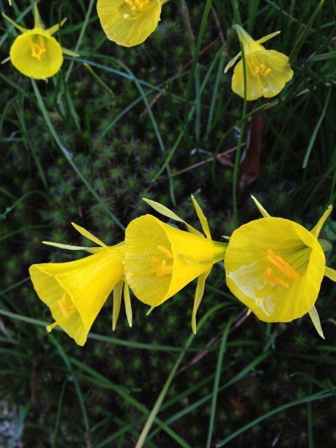 春黄色い花