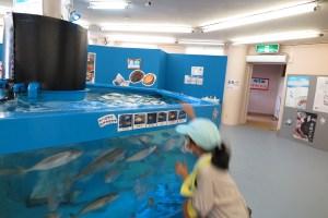 越前松島水族館 えさやり