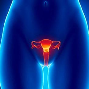 Menopausa Reposição Hormonal Bioidêntica