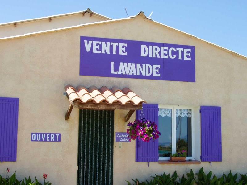 Lavender direct sale
