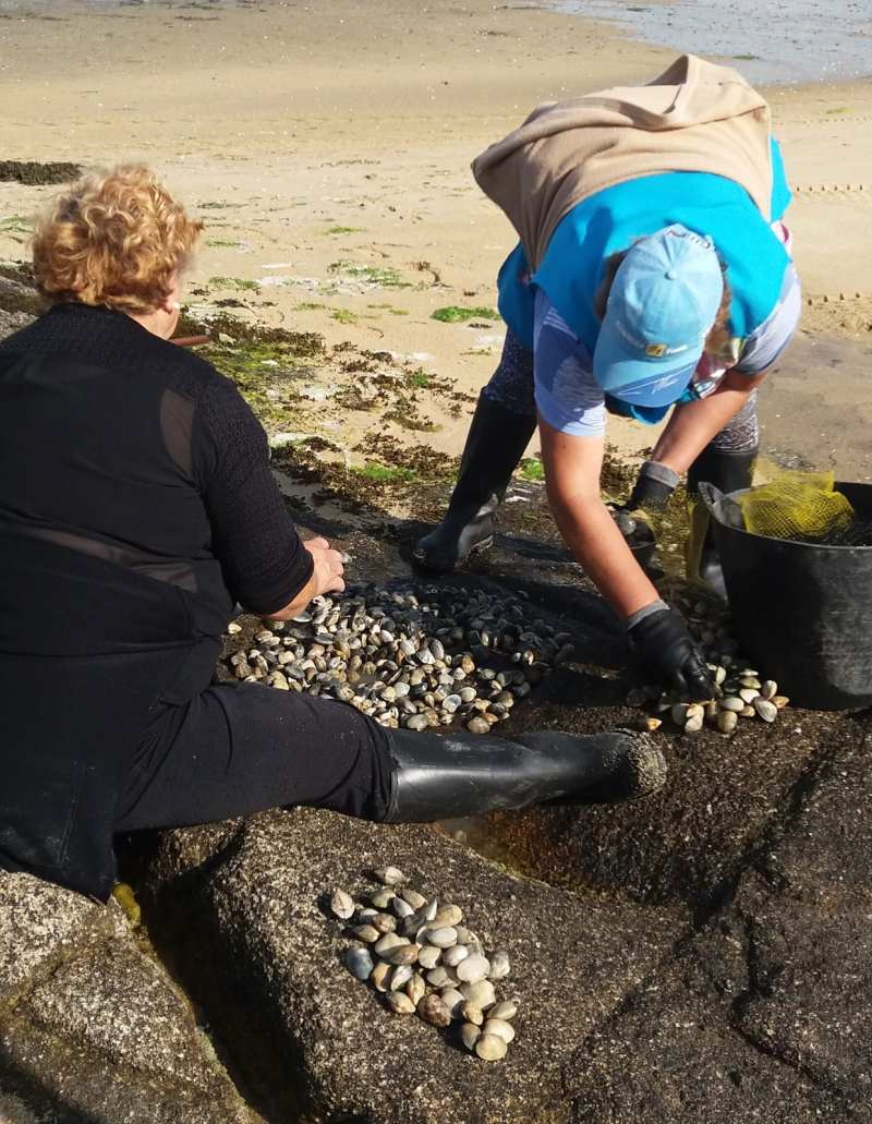 seafood harvesting
