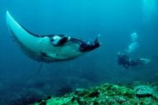 diving-bali-potapeni-manty