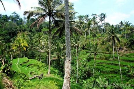 Terasy rýžových polí