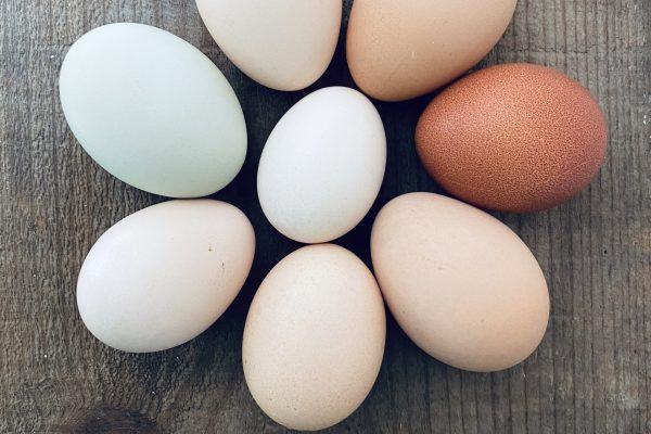 Best breeds for beautiful colorful eggs