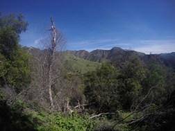 Ventana Wilderness.