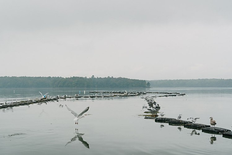 seagulls in water around mesh bags
