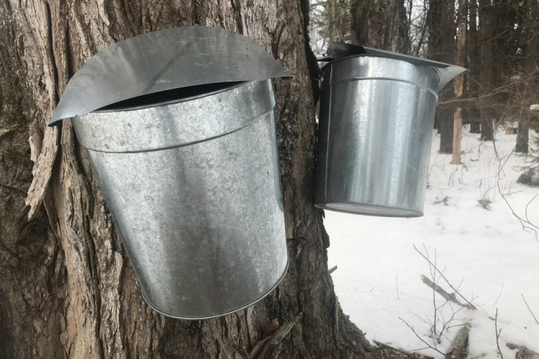 Maine maple syrup, sap buckets