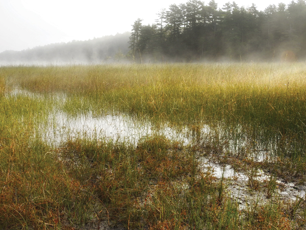 A misty marsh on Merrymeeting Bay.