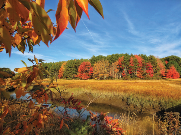 Fall color on Cutting Creek, in Phippsburg
