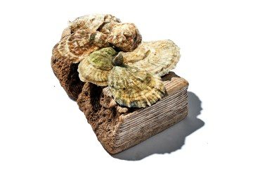 Shuck Station Oysters