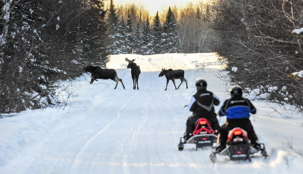 spotting moose while snowmobiling Aroostook County