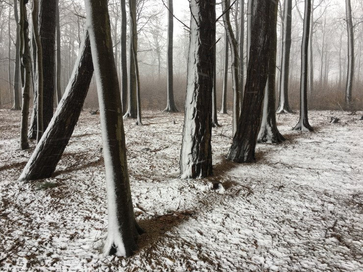 iPhone Photography Awards Announced, Volume 7: Trees and Lifestyle