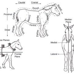 Canine Eye Diagram Right Gems Pressure Transducer Wiring Anatomy And Physiology Of Farm Animals