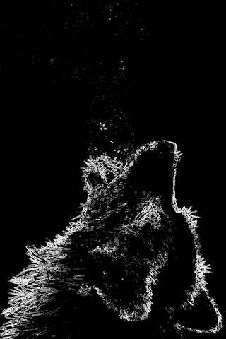 loup fond d ecran telecharger sur