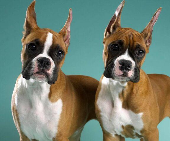 beaux chiens fond d ecran telecharger