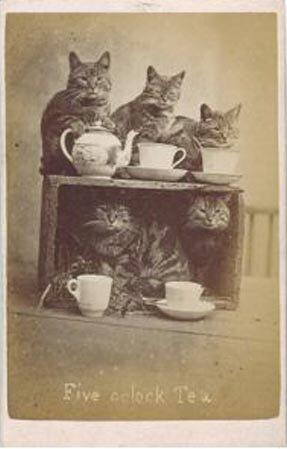 "Brighton-based Harry Pointer may have had a cult following in the 1880s with his famous cat postcards, but the reach of these early photographs was miniscule, compared with a LOL Cat image that goes viral today. Image via <a href=""http://www.photohistory-sussex.co.uk/BTNPointerCats.htm"">Photo History of Sussex</a>"