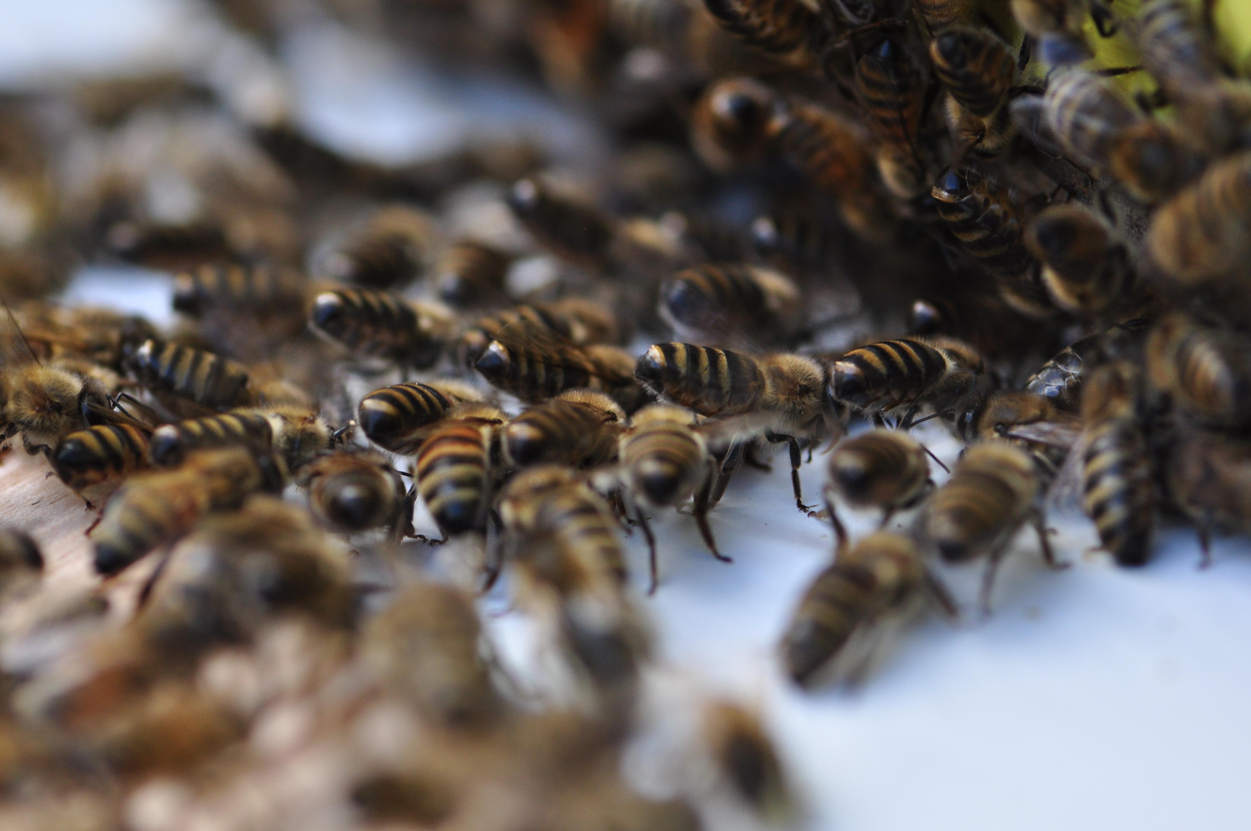 bees at the hive entrance