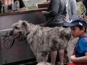 4 12 big dog