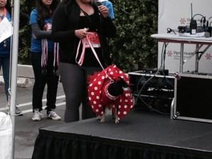 4 12 minnie mouse dog winner