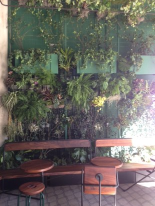 Wall Garden of Verve's Outdoor patio
