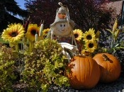 Pumpkins and Scarecrow in the Fall.