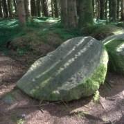 Rock Art Cavan Burren Woods