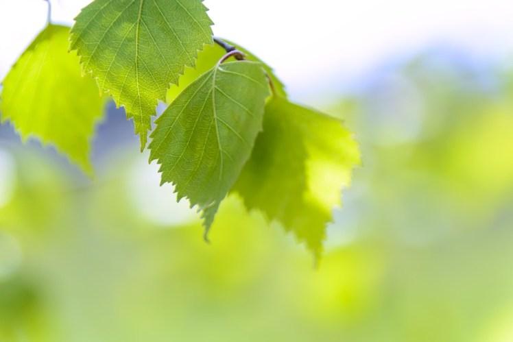 Sunshine shining on leaves.